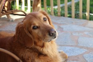 You will have to help your dog settle into a new home