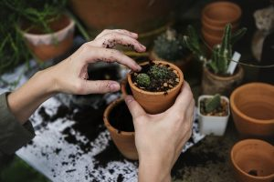 Common renovating ideas to avoid- plant pots with cactus