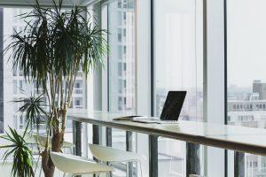 A plant inside an office