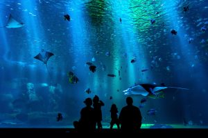 A big aquarium