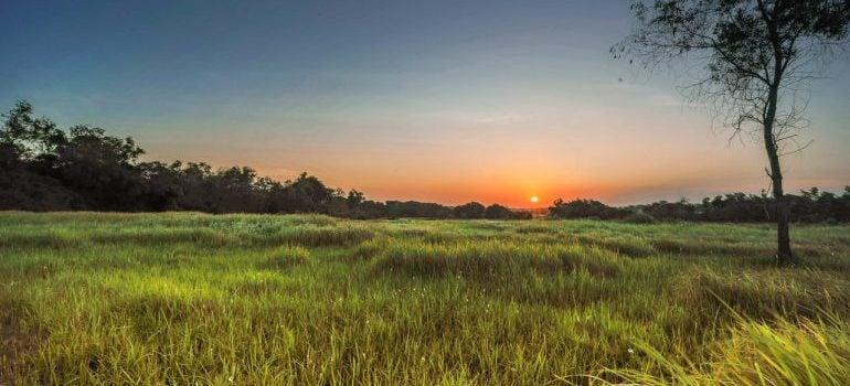 Sun rises in nature.